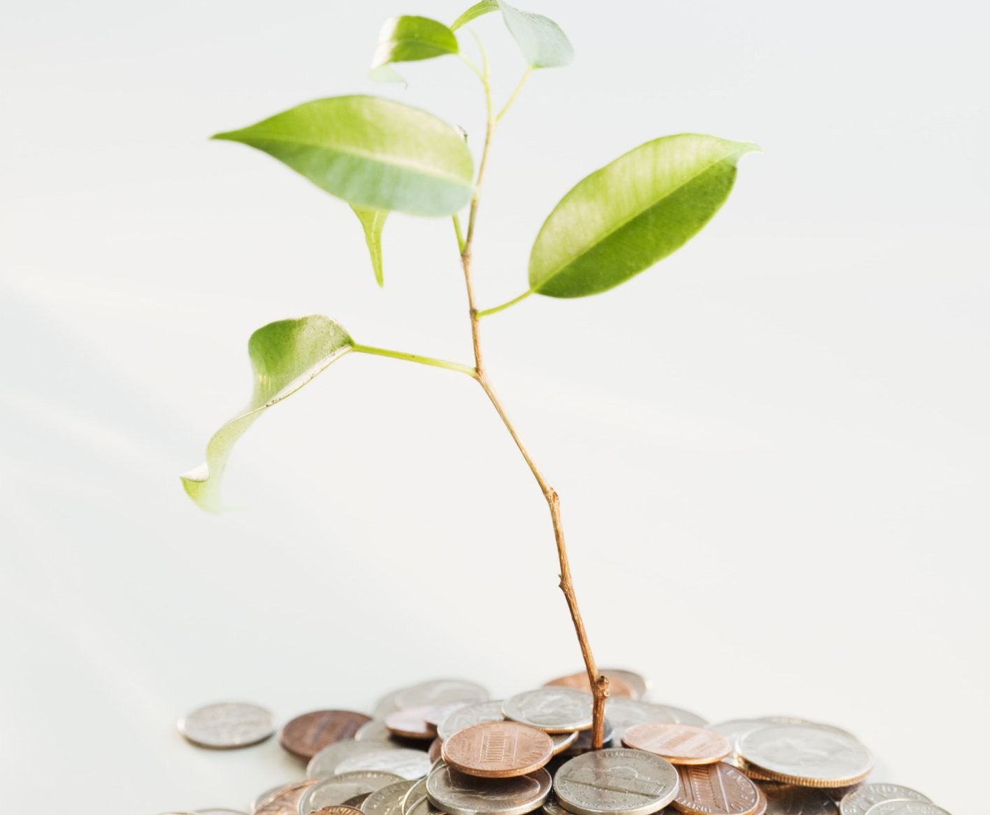 plant sprouting out of coin pile